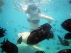Puerto Princesa Honda Bay Snorkeling